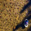 Katy-Watson_Drone_fishing-for rainbows-during-sockeye-run_Stellako-River_2018.jpg